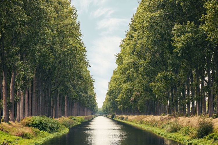 The Damme water canal in Belgium Damme Belgium Trees Canal Damme Belgium Channel Water Outdoors Park Tree Green Color Treelined Diminishing Perspective Farmland vanishing point The Way Forward