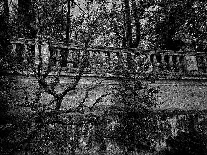 Padova, Aprile 2019 Blackandwhite City Botanical Garden Architecture Built Structure Full Frame