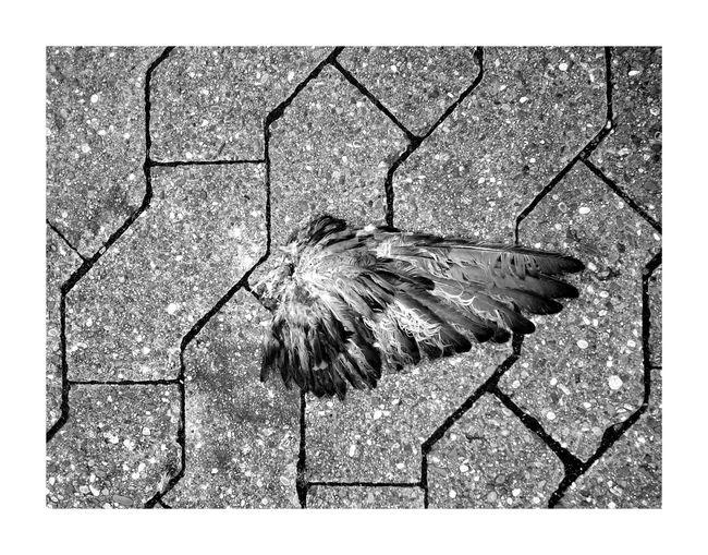 BYOPaper! Abstract Textured  Nature No People Day Street Streetphotography Streetart Blackandwhite Bw_collection BW_photography Blackandwhite Photography Structures & Lines Death Still Life Urbanphotography Photo Taking Photos Fragility City Animals Bird Wing Cut Off  The Street Photographer - 2017 EyeEm Awards