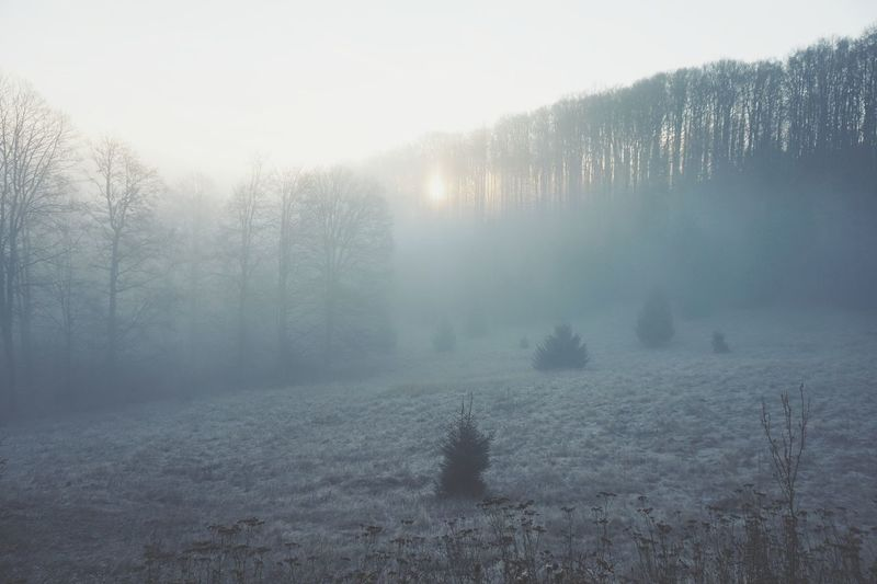Cold Temperature Winter Snow Fog Tree Weather Pinaceae Pine Tree Nature No People Forest Landscape Frozen Frost Outdoors Beauty In Nature Morning Scenics Rural Scene