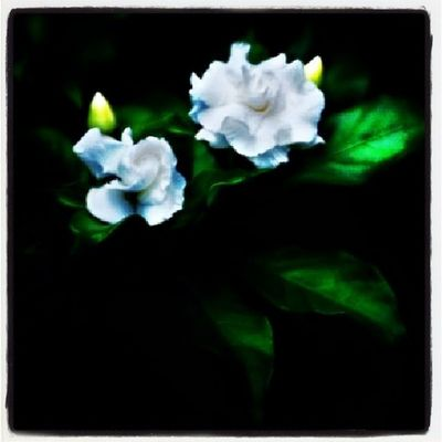 Spring Flower Spring Fotografiaromero Photography