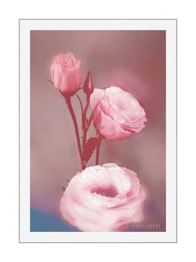Flowers Flower_nature Flower_lovers Nature_pic Ip_blossoms Amazing_flowers Flowers_daily Macrophotography IGSCFLOWERS Kings_flora Amazing_flowerz Beauty In Nature Rose - Flower Flowershot Macro Flora Pink Color Frame Studio Shot Pastel Colored White Background