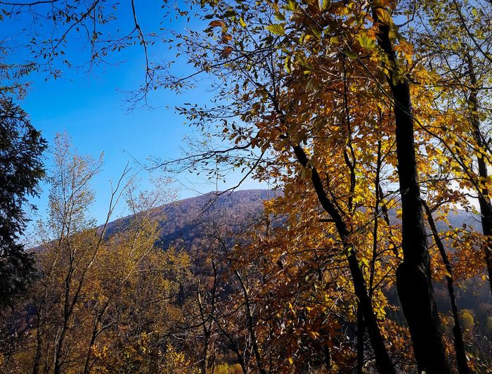 Tree Nature Growth Sky Beauty In Nature Day Outdoors Forest Tranquility Scenics Branch Shadow Leaf Growth Autumn Leaves Autumn Colors Hiking