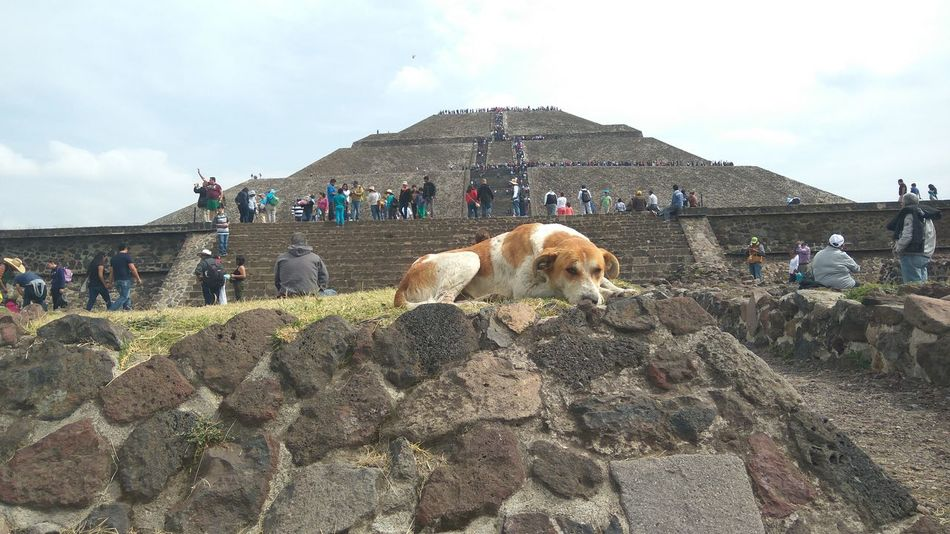 Dog Tehotihuacan Piramide Del Sol Travel Mexico