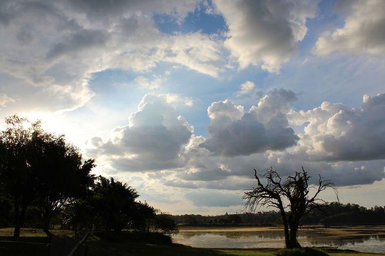Tree Water Storm Cloud Thunderstorm Dramatic Sky Sky Landscape Horizon Over Water Cloud - Sky