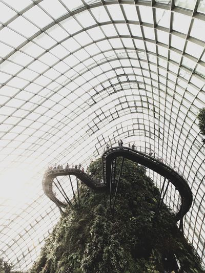 Up high. Architecture Indoors  Greenhouse Plant Futuristic Indoors  Nature Singapore Garden Built Structure Dome Lost In The Landscape Connected By Travel Lost In The Landscape EyeEmNewHere Summer Road Tripping EyeEmNewHere