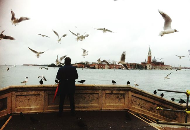 Gabbiani in volo Venice Venezia Gabbiani Gabbiano Uccelli Birds Fly Laguna Venice, Italy Ponte Bridge Bestshot EyeEm Best Shots Relax Relaxing Panorama Campanile Laguna Di Venezia  Venice Lagoon Italia Cielo Sky Riva  Riva Di Venezia