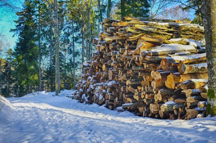 Sunny and Snowy Wood in HDR