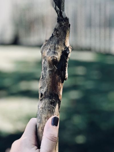 Cropped hand of woman holding burnt wood on field