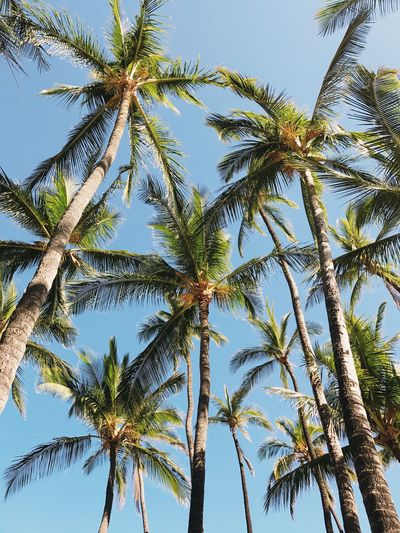 🌴& ☀️ for days 😎 Sky Palm Tree Low Angle View Tree Trunk Beauty In Nature Scenics Tropical Climate Tranquility Blue Growth Travel Destinations Clear Sky Outdoors (null)Vacations No People Adventure Nature Sommergefühle