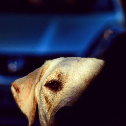Dog One Animal Domestic Animals Pets Mammal Animal Themes Close-up No People Animal Body Part Portrait Buenos Aires Nikon Honda Fit