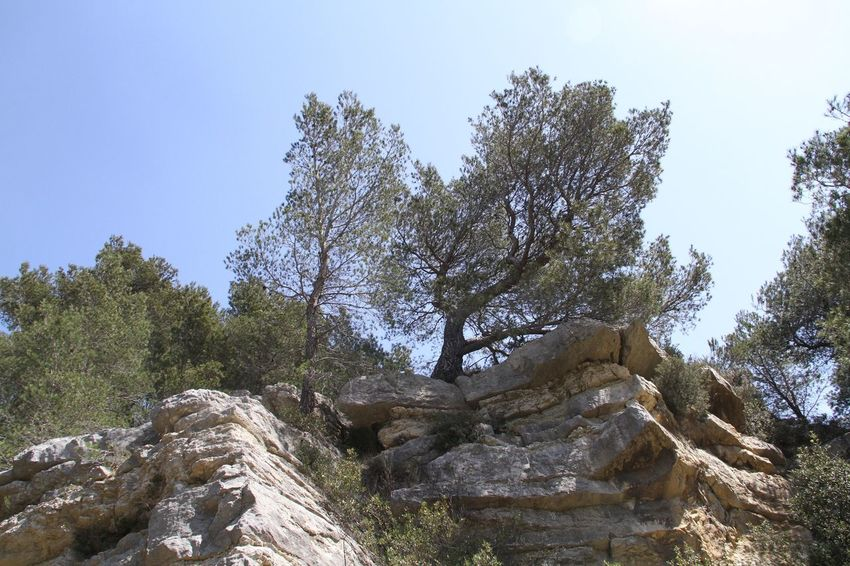 Intothewild Rocks
