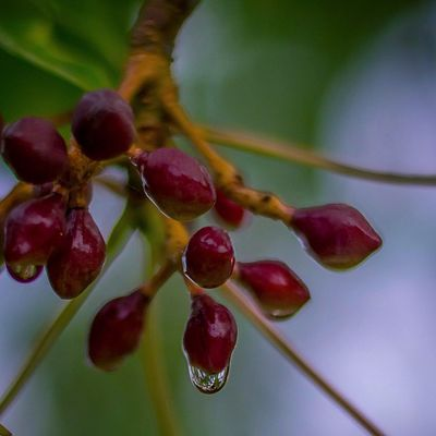Nature Grenada Ilivewhereyouvacation Islandlivity Wonderful_places Westindies_pictures Caribbean_beautiful_landscapes Color_n_nature Earth_captures Theworld_thru_youreyes Thebestpicsoftheearth Droplets Nikon Shutterbug_collective