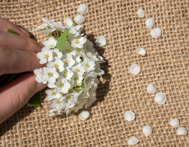 Cropped hand holding white flowers on burlap