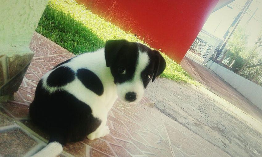 Dog Feijão First Eyeem Photo