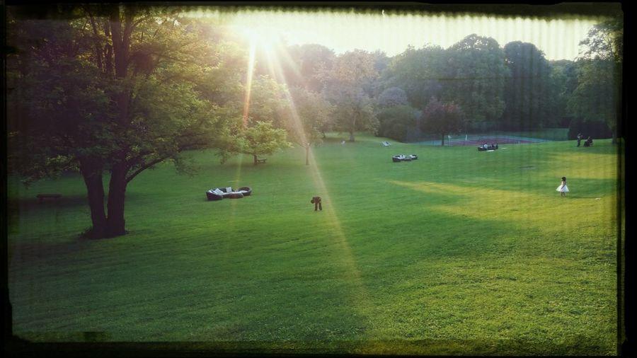 Park Park
