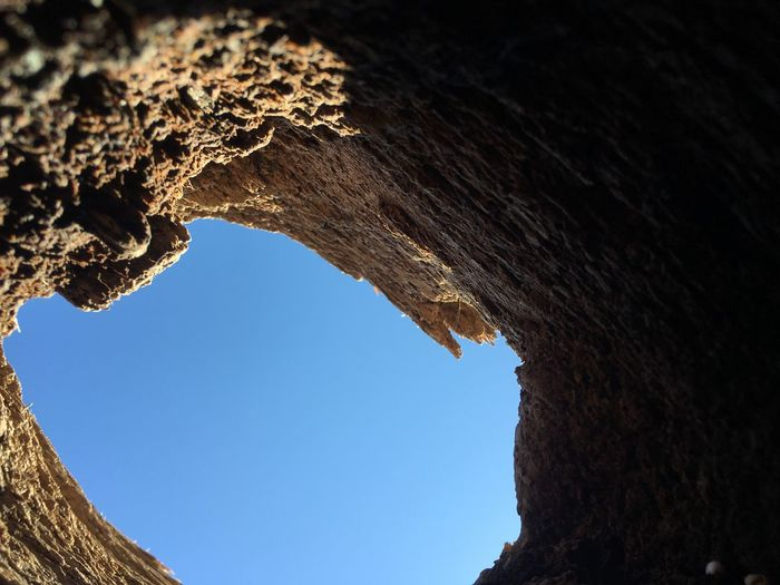 Hole in a log