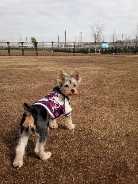 Outfitoftheday Yorkie Yorkshire Terrier I Love My Dog Puppy Love Hanging Out
