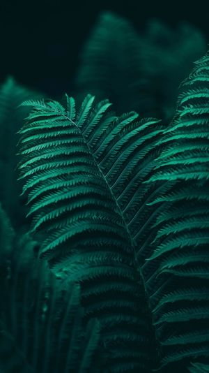 Beauty in nature's design Tones Moody Jungle Close-up Leaves Bokeh Nature Photography Aqua Teal Leaf Plant Part Green Color Growth Plant Fern Close-up No People Nature Beauty In Nature Day Backgrounds Full Frame Outdoors Natural Pattern Freshness Focus On Foreground Tree Leaves Tranquility