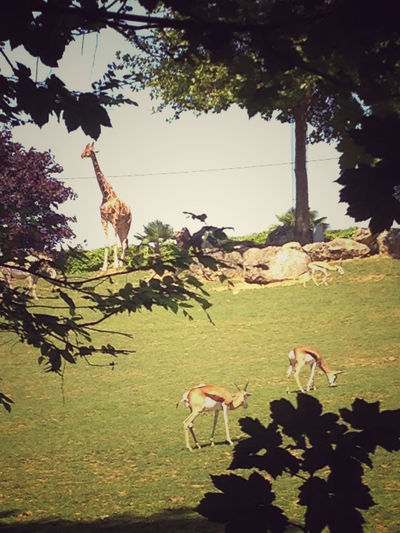 Variagated Animals Gazelle Giraffe Giraffes! Vintage Style Photo-Shoot Animal Themes Four Animals Five Animals Gazelles Giraffes Remote Shooting Tree Window Vintage Photo Retro Windows Leaves Oak Leaves Vintage Edit  Eyeem Market EyeEm Best Edits
