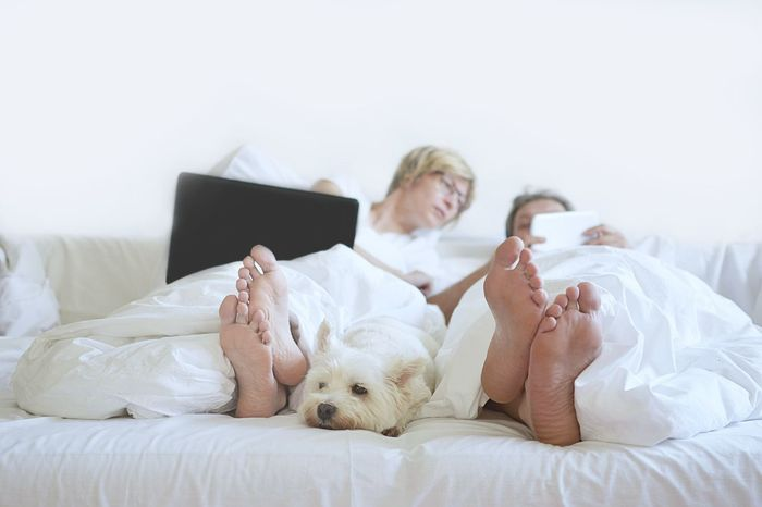 home comfort white dog in bedroom Bed Bedroom Relaxation Furniture Women Domestic Animals Dog White Terrier Man Woman White Room Footpath Bedroom Interior Comfortable Laptop Telefon Love Happiness Home Comforts  Lifestyles White Dog Relaxing Purebred Dog