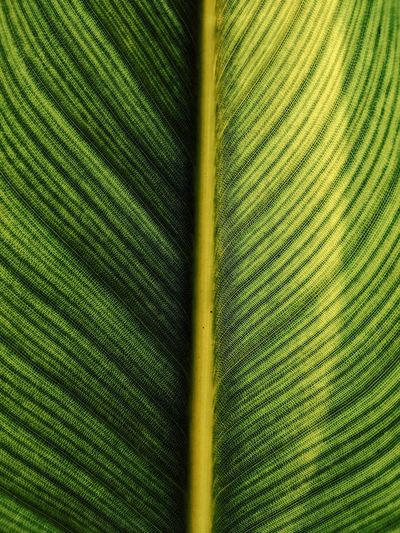 Full frame shot of palm tree leaves