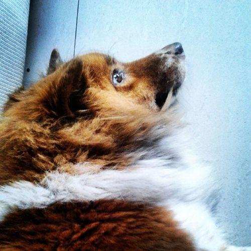 Nhìn hiền vậy thôi chứ cách đây 1 tuần e nó cắn chết tươi con chuột đấy :)) Superdog Cutie Tobemập
