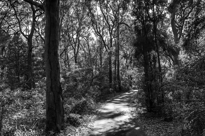 The walking trail Light And Shadow Black And White Blackandwhite Monochrome Tree Nature Forest Tranquility Tranquil Scene Growth No People Beauty In Nature Tree Trunk Scenics Day Landscape Outdoors Sunlight Branch Bare Tree