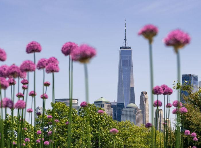 Pink flowering plants in city against sky
