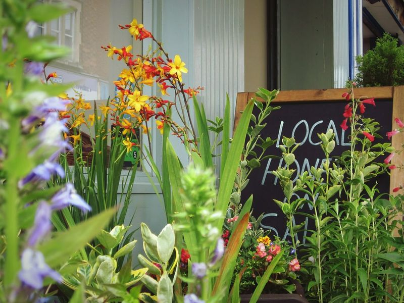 """""""Local Honey"""" The Shop Around The Corner Fruit And Vegetables Local Shops Flower Collection Display Popular Photos Showcase August Colours Of Nature The Week On Eyem Colours Of Life Nature"""