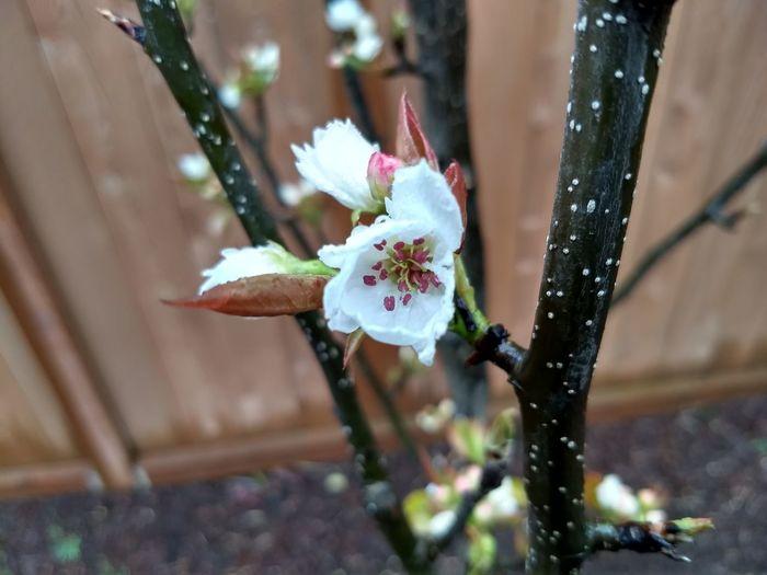 ides of spring