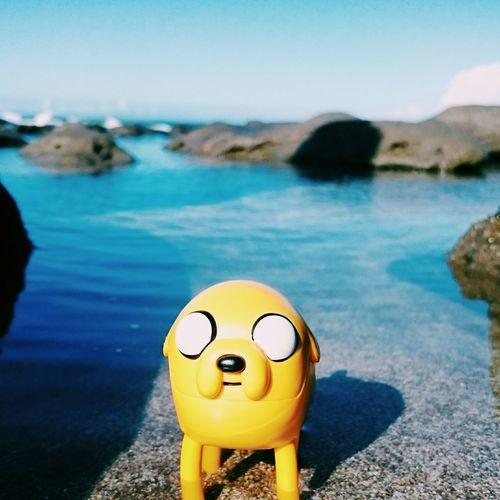 老皮,來泡澡。 Jake The Dog 老皮 Being A Beach Bum Relaxing Seaside