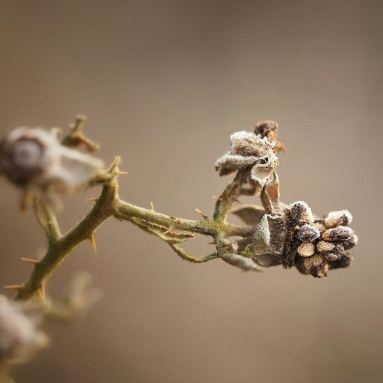 rasberries from winter-withered Walking Around Depth Of Field Macro Photography Flower Collection Bokeh Nature