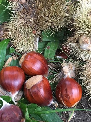 Sweet Chestnuts 🌰