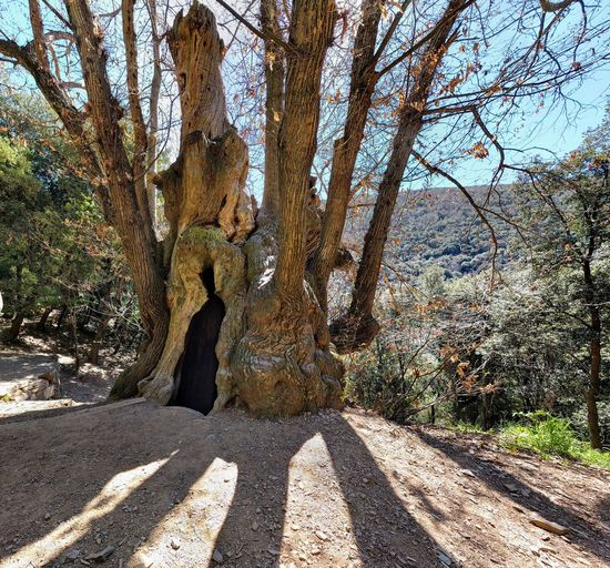 Shadow Sunlight Day One Person Real People Outdoors Nature Men Road Standing Low Section One Man Only Tree Only Men Sky Adult People árbol Castaño Cuch Cànoves Monumental Tree