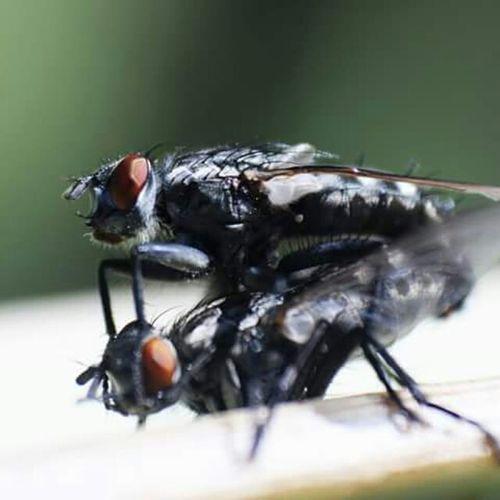 Open Edit Bugslife Insects  Biology Pukebutterfliesbecauserainbowsaresciencystuffyoucantpuke BreedingTime Breeding 101 even bugs fuck each other