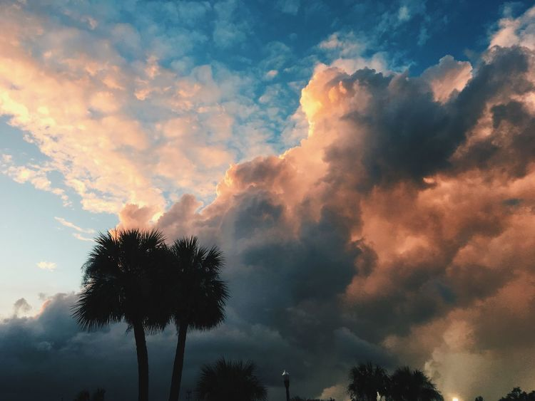 Palm Tree Sky Low Angle View Cloud - Sky Beauty In Nature Tree Silhouette Palm Tree Sunset Nature Scenics Tranquility Outdoors No People Tranquil Scene Growth Day Florida Sunsets Clouds And Sky Clouds Color