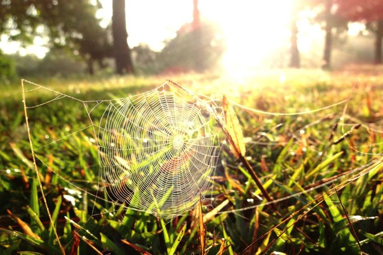 Perspectives On Nature Nature Focus On Foreground Outdoors Spider Web No People Day Growth Beauty In Nature Green Color Tree Close-up Grass Tranquility Fragility EyeEmNewHere The Week On EyeEm See The Light Capture Tomorrow