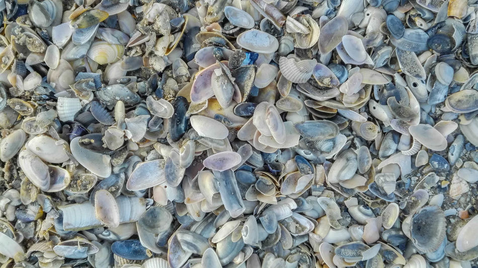 Abundance Backgrounds Beauty In Nature Berck Berck Plage Close Up Close-up Color Colorful EyeEm Best Shots Full Frame Large Group Of Objects Narture Nature Nature_collection No People Outdoors Pebble Sand Sand Dune Sea Seashell Seaside Shell Shells