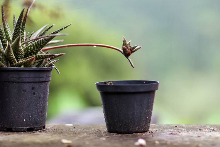 Reaching Potted Plant Potted Plants Moving On Branching Out Leaving Home Plant Growth No People Day Leaf Beauty In Nature Flower Pot Outdoors
