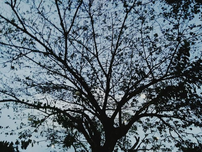 things behind a tree Tree Nature Sky Growth Outdoors Branch Beauty In Nature Scenics Life Mood Captures Love❤ Simple Photography Nature Sky And Clouds Perfect Detailed Deep Meaning Tree Fallenleaves Low Angle View No People Tranquility Day EyeEmNewHere