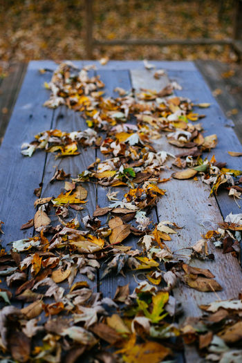 Fall feast Autumn Leaf Dry Nature No People Outdoors Wet Close-up Beauty In Nature Autumn🍁🍁🍁 Fall_collection Fall Beauty Autumn Fall Autumn Leaves Fall Colors