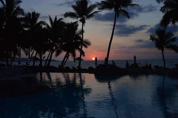 a fiji sunset Double Tree Hotel By Hilton Fiji Islands Palm Tree Coconut Trees First Eyeem Photo Ocean Poolside Sunset Perspectives On Nature An Eye For Travel