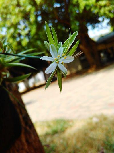 Flower Beauty In Nature Single Flower Day Green