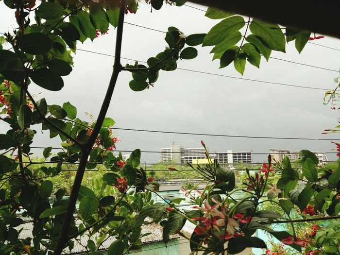 Myjome Outside Cloudy Weather⛅☁ Freshness Plant Beauty In Nature Nature High Angle View LoveMe Flowerlovers Check This Out!