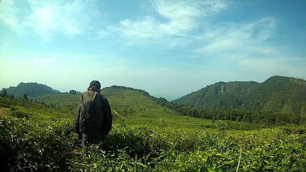 Kopi dan teh Mt.ungaran . . Kebunteh Kebunkopi Idpendaki Partnertrip Lingkarindonesia Greenland Vscocam Kerengan INDONESIA Dagelan Igersuii Bpro5alpha Bricaindonesia Bpro5 Id_pendaki Wonderful_places Wonderful_location Hellobackpacker Id_pendaki @id_pendaki Indomountain Traveler Consina Cozmeed Alldayeksploring
