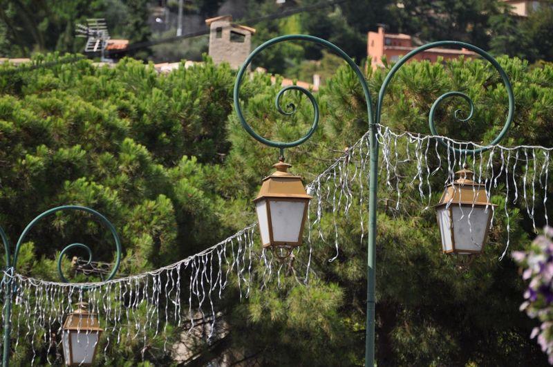 Electric lamp hanging on street in yard