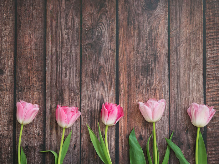 Flower Freshness Wood - Material Plant Pink Color Flowering Plant Petal Beauty In Nature Fragility Vulnerability  Close-up Nature No People Inflorescence Flower Head Tulip Growth Outdoors Day Side By Side Wood Grain Tulips Festive Background