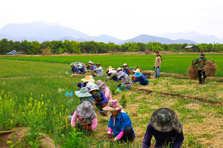 People working in farm against sky