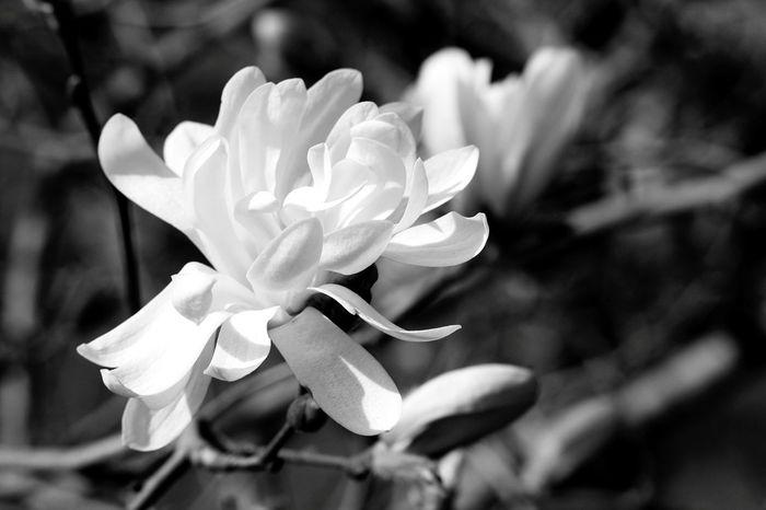 Spring Bwphoto Blackandwhitephotography Canonphotography Taking Photos Check This Out Blackandwhite Hello World Alnarp Enjoying Life Hi! InTheGarden Lifeisgood Whitebeauty Happiness Park